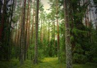 Почти компьютерная игра: виртуальные деревья в Смоленском поозерье оживут