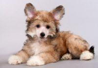 В Смоленске хозяева хотели усыпить здорового четырехмесячного щенка