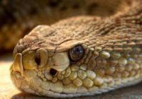 В Сафонове местные жители испугались змею и вызвали спасателей