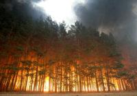 МЧС предупреждает о возможных лесных пожарах
