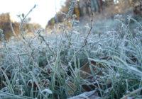 В Смоленскую область придут заморозки