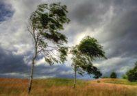 На Смоленск надвигается сильный ветер