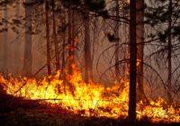 В Смоленской области установлен средний класс пожарной опасности
