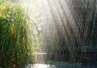 В Смоленск придут дожди
