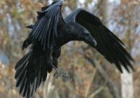 В парке Блонье на людей нападают птицы