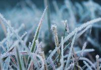 В Смоленск придут заморозки и сильный ветер