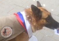 Собака Пятница из Смоленска угадала исход первого матча ЧМ по футболу