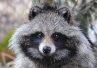 Смолянам предлагают присоединиться к мониторингу редких животных и растений