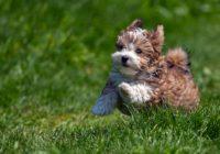 В Лопатинском саду запретили гулять с собаками
