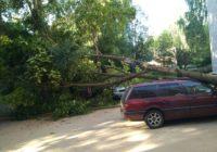 В Смоленске упавшее дерево повредило три автомобиля
