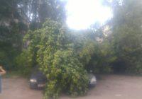 В Смоленске снова упало дерево на автомобили