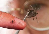 Больше тысячи человек пострадало от укусов клещей