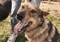 Собачье Сердце. История о том, как одна женщина содержит в приюте 170 собак