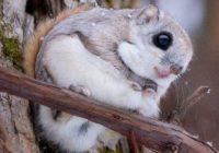 Общественный мониторинг редких видов растений и животных Смоленщины