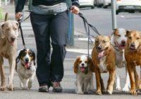 В Смоленске определили территории для выгула собак