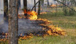 В Смоленской области объявлен высокий уровень пожарной опасности
