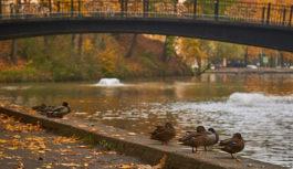 Идеи для уикенда в Смоленске и области. 20-21 октября