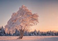 На следующей неделе в Смоленске будет морозно