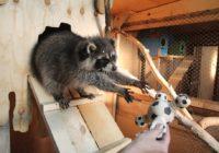Как реализуется закон «Об отвестсвенном обращении с животными»