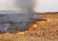 В Смоленске борются с палом травы