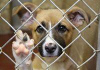 Смоленский приют для собак нуждается в помощи