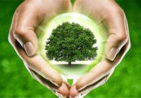 В Смоленске пройдёт акция «Сохраним лес»