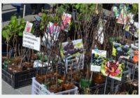 В Смоленске пройдёт ярмарка «Сад-огород»
