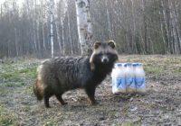 Животные Смоленского Поозерья оценили оставленную сгущенку