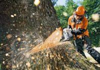 В Смоленске снесут аварийные деревья
