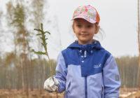 Волонтёры Гагаринского района высадили 15000 саженцев
