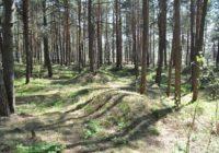 Курганам в Смоленской области дадут «археологические паспорта»