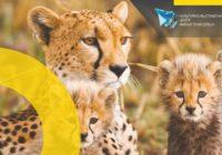 В Смоленске откроется выставка постоянного фотографа National Geographic