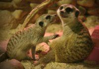 Смоленский зоопарк запустил новую акцию