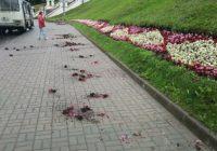 На Большой Советской возле Успенского собора неизвестные разгромили клумбу