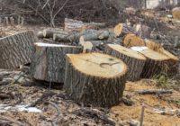 «Зеленая среда». В Смоленске будут обсуждать проблемы озеленения города