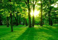 Открытое обсуждение вопросов озеленения города пройдёт в Смоленске