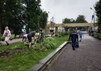 Центральную аллею в Лопатинском саду озеленили многолетними растениями