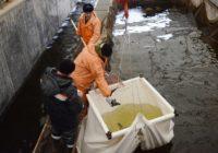 Смоленские рыбоводы получили 5 миллионов рублей на развитие производства