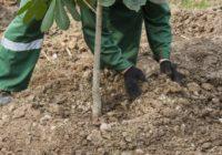 В Смоленске высадят 6000 кустарников и 550 деревьев