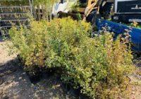 В Смоленске стартует масштабная высадка растений