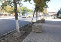 В Смоленске на проспекте Гагарина увеличат зелёную зону