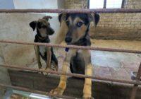 Смоленский приют для собак просит помощи в организации кухни для питомцев