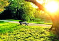 Стало известно, какие парки Смоленска будут обустроены в ближайшем будущем