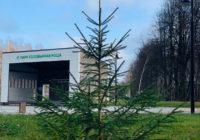 В «Соловьиной роще» высадили 20 новых деревьев